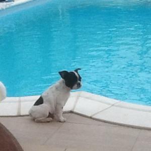 franse bulldog - lola